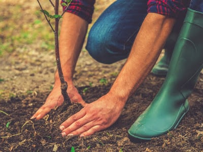 Planting Of Flowers Or Bulbs