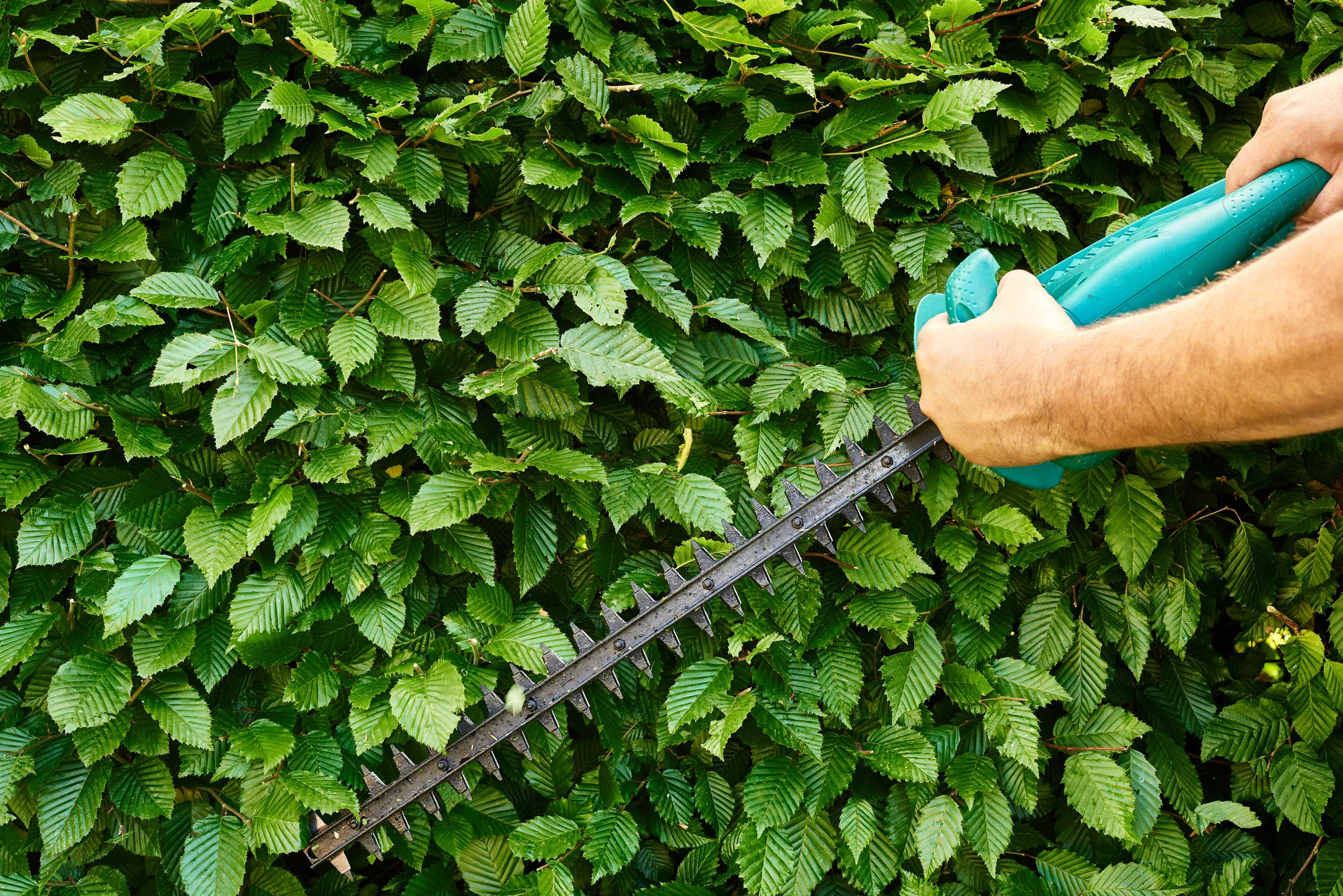 Trimming Of Bushes