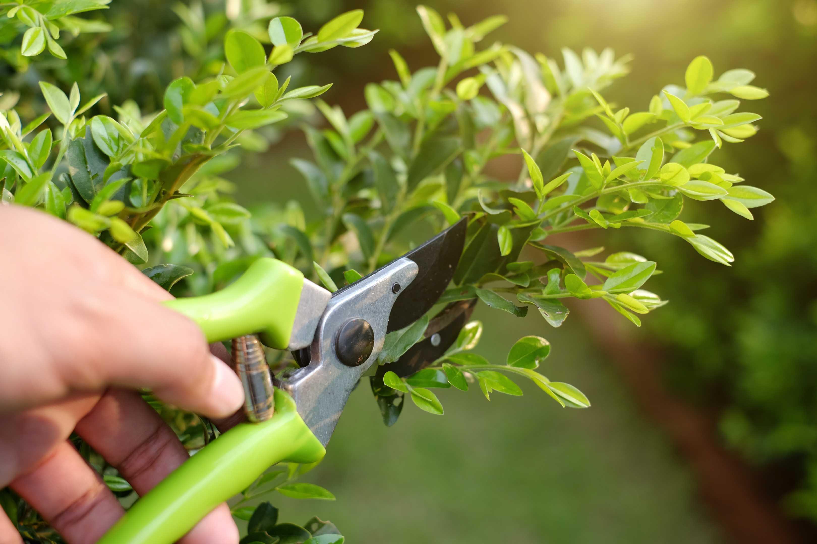 Small Tree & Bush Trimming