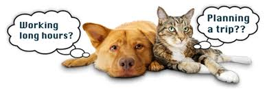 Pet Sitting (In your own home)