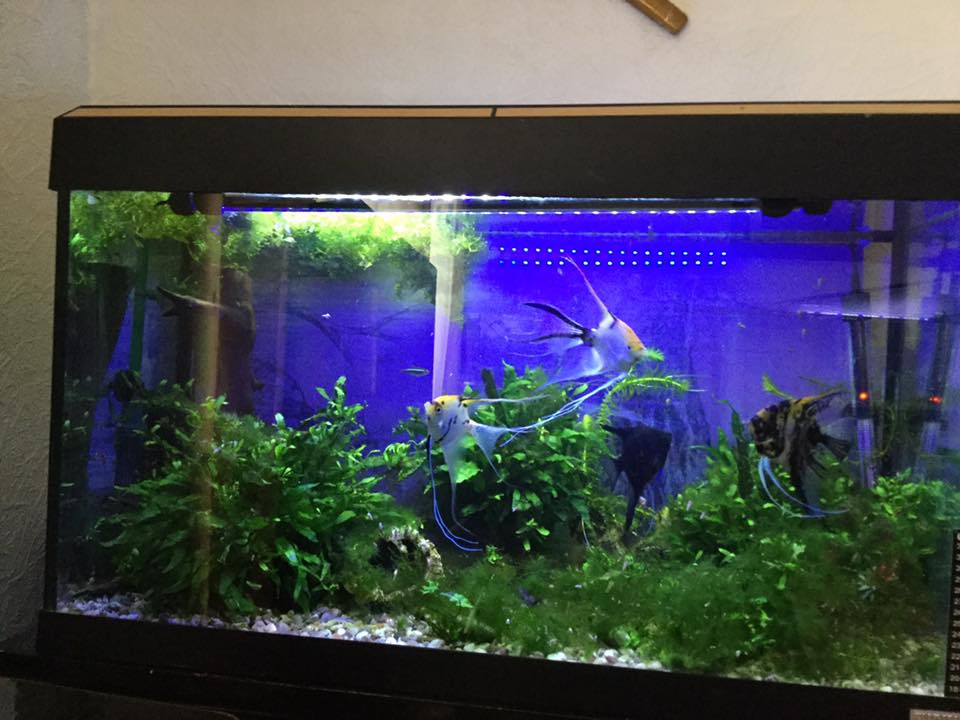 Darkwater Aquatics LTD