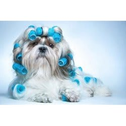 The Wagging Tail Groom Room Skelmersdale