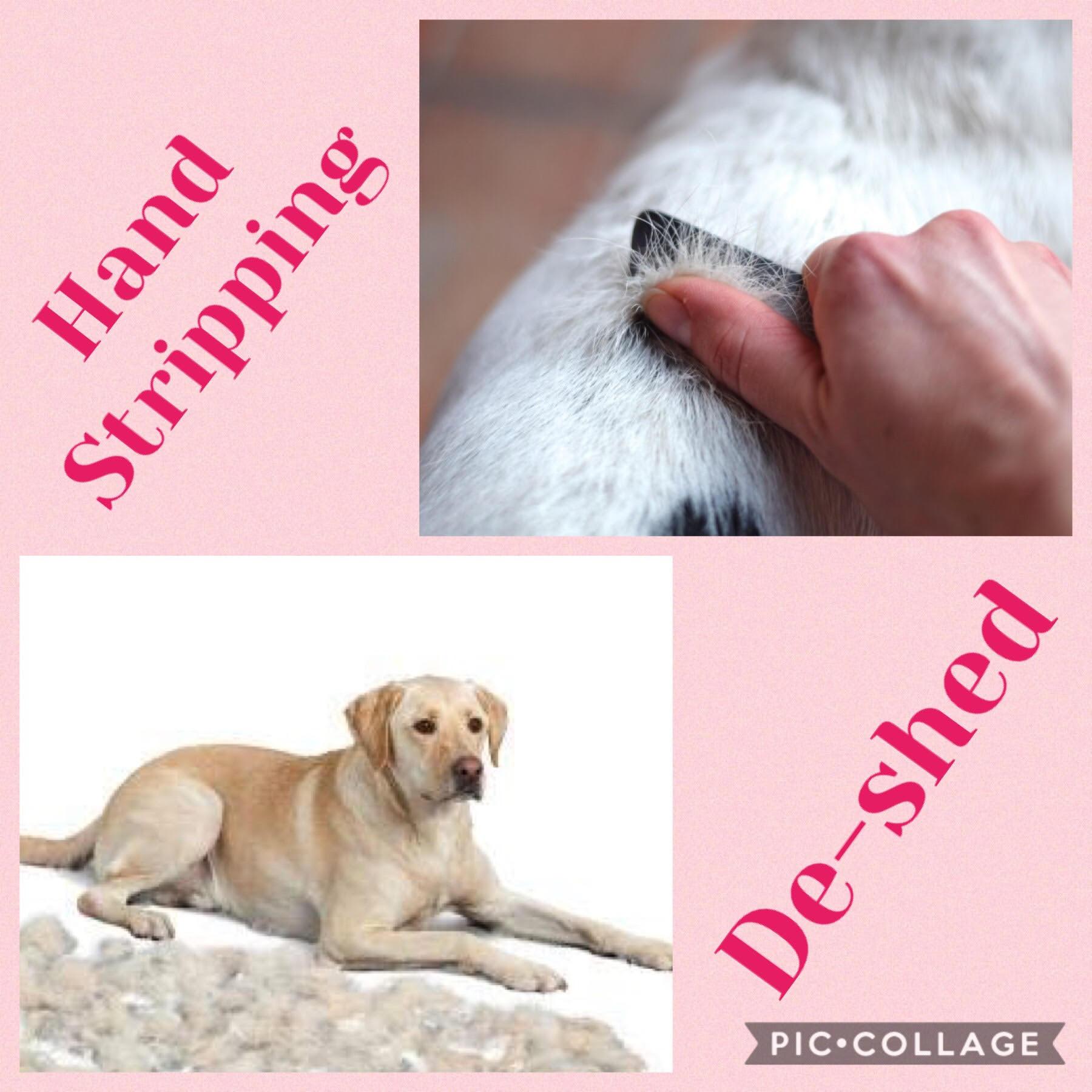 Animal Fur - Hand Stripping