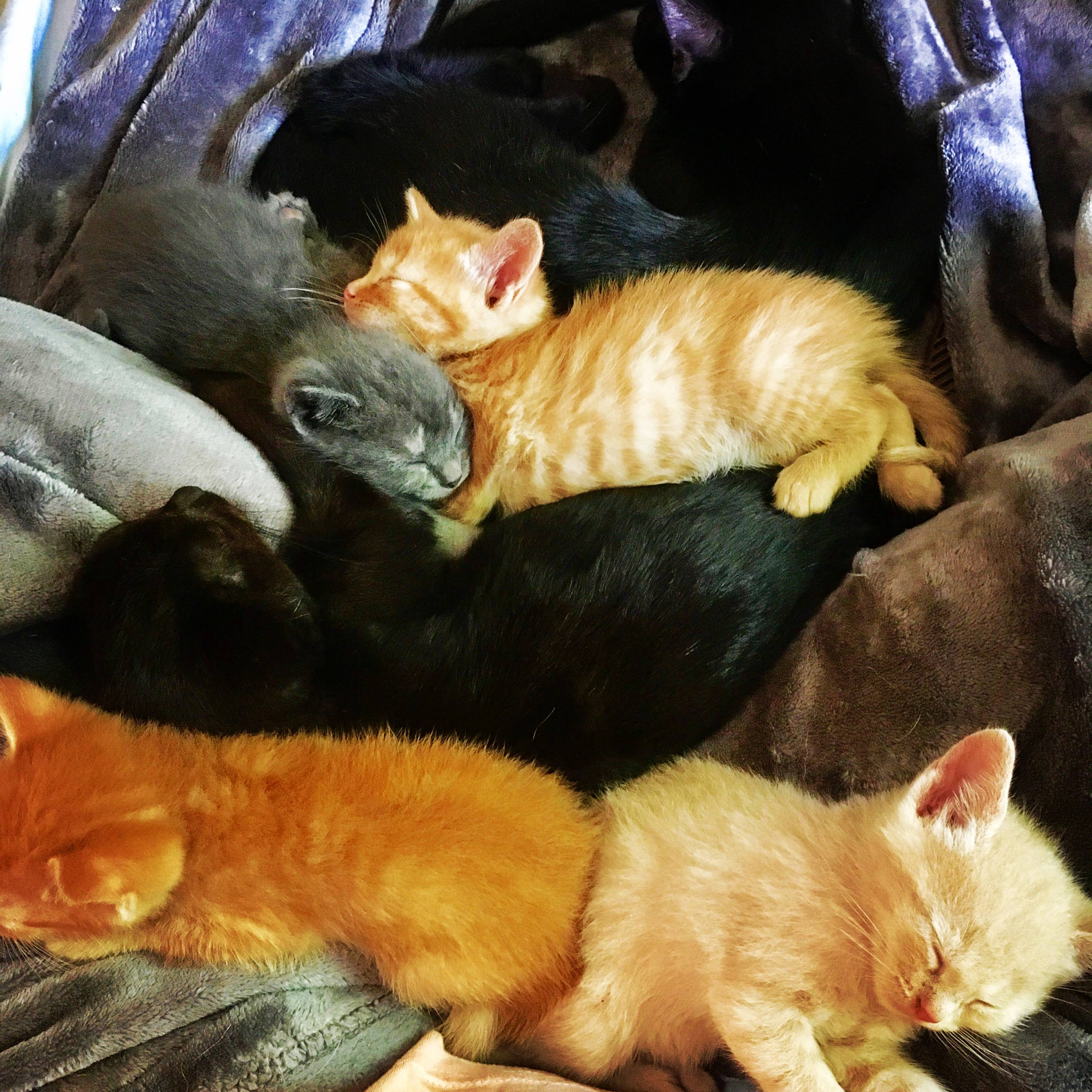 2 Kitten Adoption