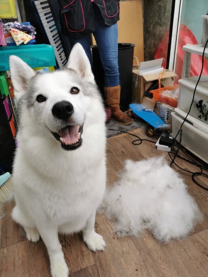 Coat deshedding