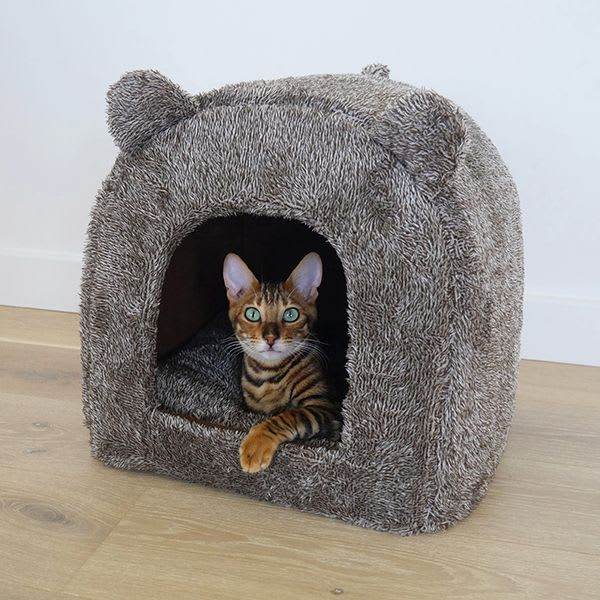 Cat Sitting Overnight