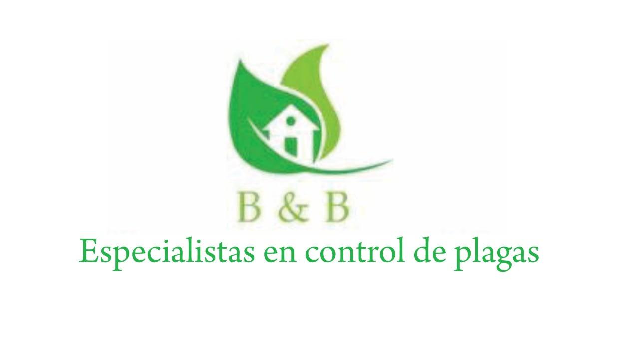 Servicio B&B Control De Plagas